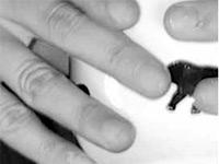 Finger in Grossaufnahme