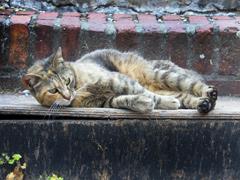 Katze liegt auf einer Stiege