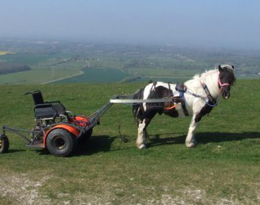 Ein Pony mit einem rollstuhlgerechten Wagen steht auf einer Wiese.