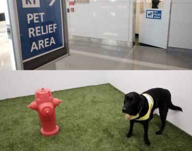 Ein zweigeteiltes Bild. Im oberen Bild der Hinweis PET RELIEF AREA in einem Flughafengang und man sieht auch die Tür zum Raum. Im unteren Bild sieht man diesen Raum von innen. Es ist Kunstrasenboden mit einem Wasserhydrant aus Plastik damit die Hunde ihr Geschäft verrichten können. Ein Hund steht am Gras.