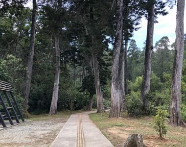 Man befindet sich im Wald. Entlang des Fußweges der betoniert ist in der Mitte ein Blindenleitstreifen in gelb. Links am Rand sieht man noch einen Teil einer Picnicstelle mit Überdachung.