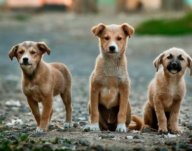 3 braune, junge Hunde schauen sie an.