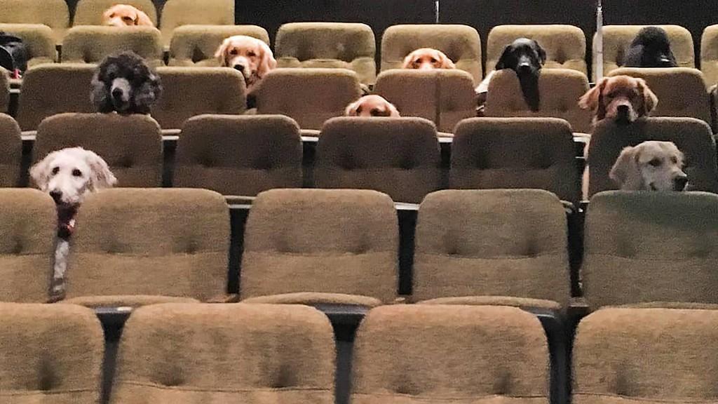 11 Assistenzhunde sitzen auf Theatersitzen