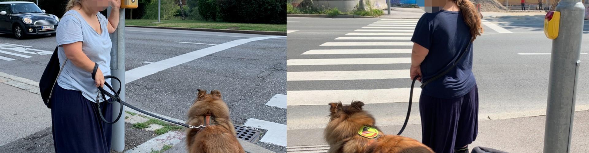 2 Bildhälften, links Wien, eine kleinwüchsige Frau mit einem braunen Hund steht neben einem Ruftaster für eine Ampel. Der Knopf ist über ihrem Kopf. Rechts, die selbe Frau neben einem Rufknopf einer Ampel in Salzburg. Hier ist der Rufknopf in ihrer Schulterhöhe und sie kann ihn leicht erreichen